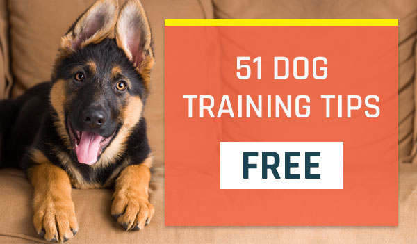 51 Dog Training Tips