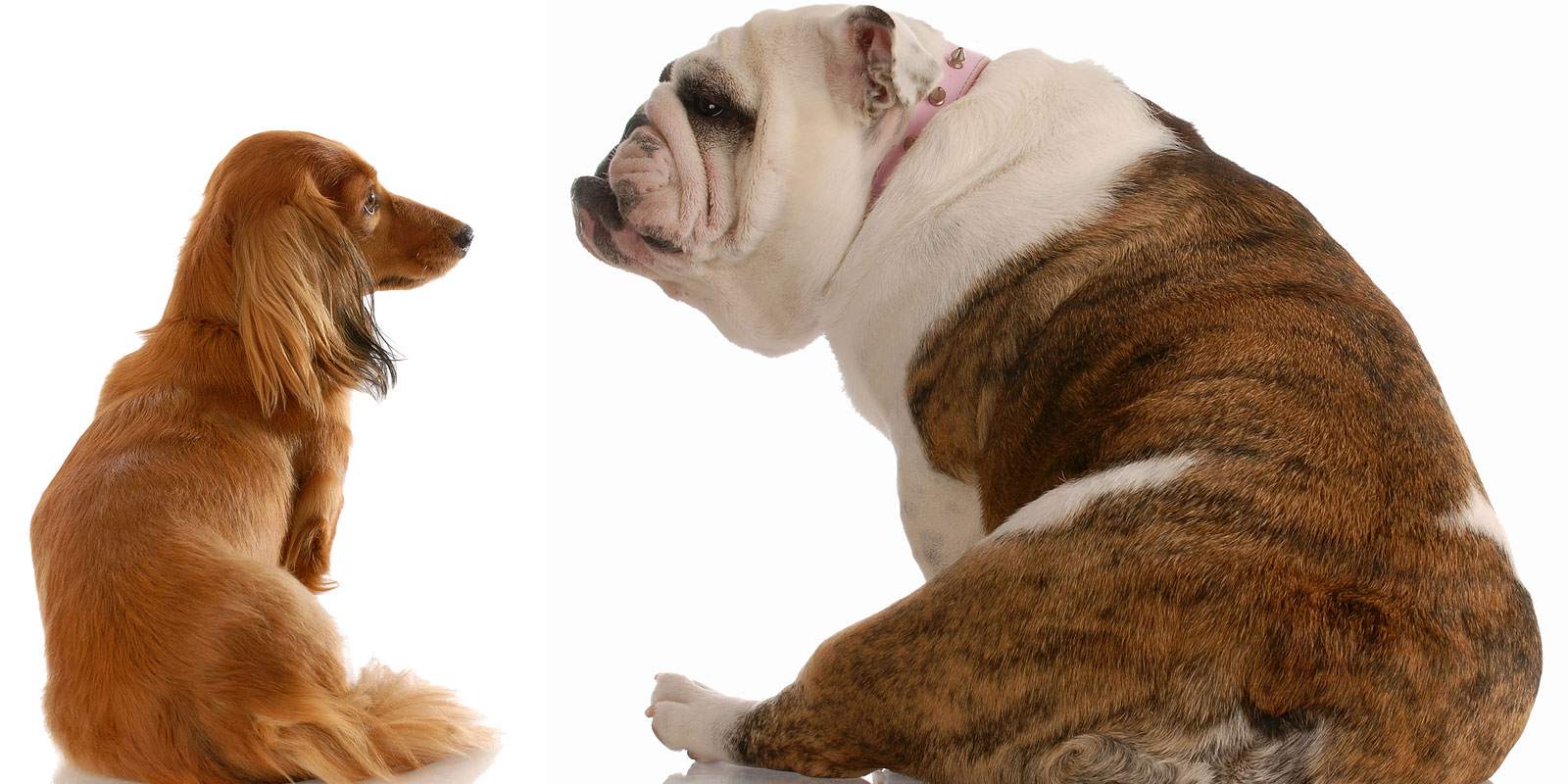 Is Your Dog Fat?