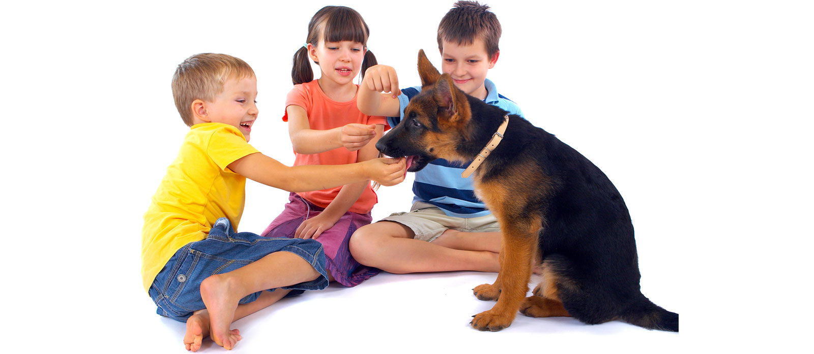 Puppy Socialisation – Getting It Right